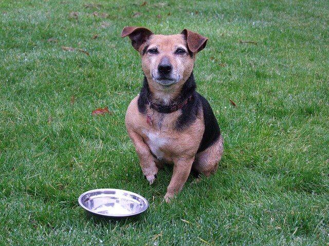 67921אוכל לכלבים – דברים שחשוב לדעת