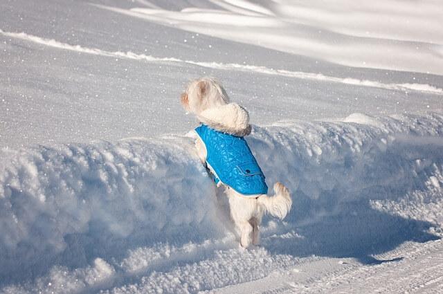 27255בגדים לכלבים לכל מזג אוויר